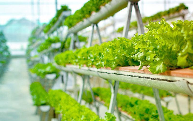 Vertical Farming: The New Age Agriculture